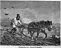 Великорусская соха.jpg