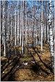Весна на Южном Урале. - panoramio.jpg
