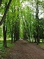 Весняні алеї в парку.jpg