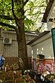 Вікові дерева дуба звичайного, Обухів 012.jpg