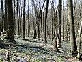 В весеннем лесу - panoramio.jpg