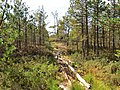 Кегумское болото - panoramio.jpg