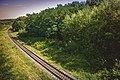 Колія і околиці лісу.jpg