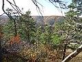 Лес на возвышенности. Самарская лука.jpg