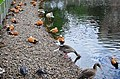 Московский зоопарк. Фото 9.jpg