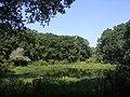 Озеро Білякове (Заказник Хорішки).jpg