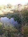 Природа Алматы 13.jpg