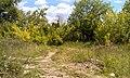 Проход в заборе в сад СНТ завода Пластмасс - Сад 1 - panoramio (1).jpg