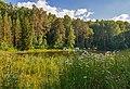 Пруд на территории Центрального Сибирского Ботанического Сада СОРАН 01.jpg