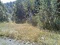 Сворот в сторону Макарово и Кулгунино - panoramio.jpg