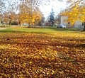 Царникава (Латвия) Осенний газон в городском парке - panoramio.jpg