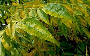 טיפות גשם על צמחים בארץ הדודש