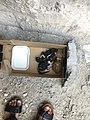 قطط حديثة الولادة في صندوق مع صحن من اللبن.jpg