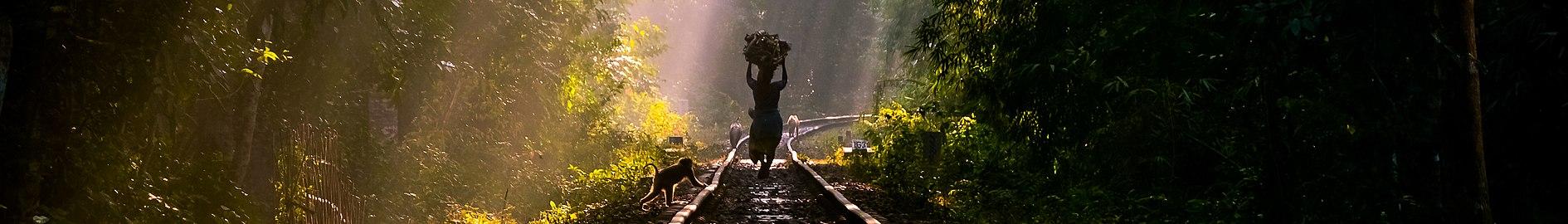 লাউয়াছড়া জাতীয় উদ্যান (ব্যানার).jpg