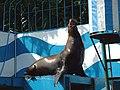 オホーツク水族館 (北海道網走市二ツ岩海岸)16 トド.jpg