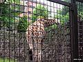 上野動物公園, Ueno Zoo(Ueno Zoological Gardens) - panoramio (33).jpg