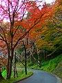 吉野山・七曲りにて Nanamagari 2011.11.27 - panoramio.jpg