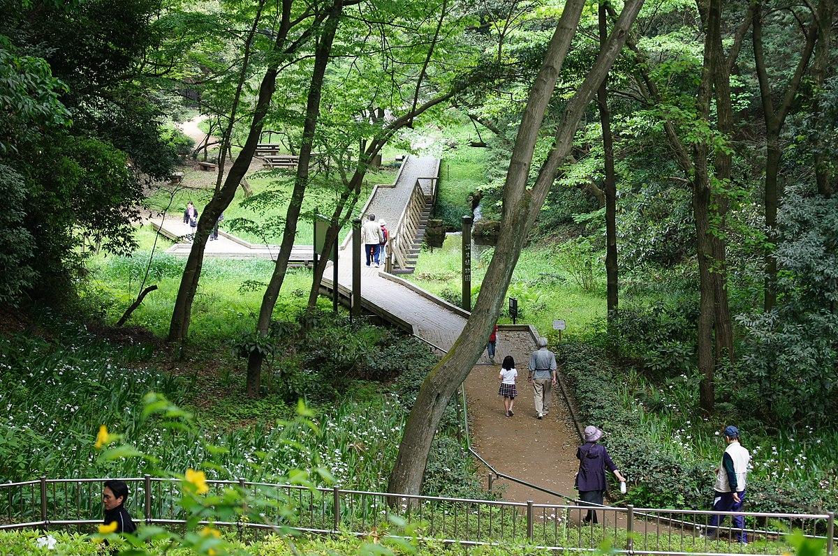 高根 森林 公園 東