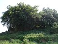 桂子山碉堡 - panoramio.jpg