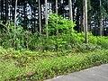 立山町 Tateyama-machi - panoramio (1).jpg
