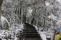 陽明山降雪 02.jpg