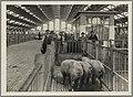 1108WP-4 - Abattoirs et marché aux bestiaux de la Mouche - Tony Garnier 10.jpg