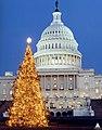 1999 U.S. Capitol Christmas Tree (31657782972).jpg
