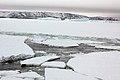 2007 Snow-Hill-Island Luyten-De-Hauwere-Sea-Ice-30.jpg
