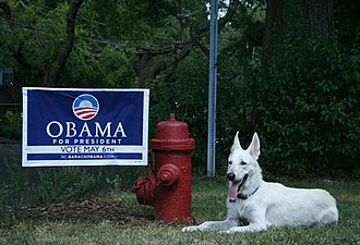 2008-08-03 White German Shepherd supporting Barack Obama.jpg