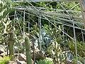 2008 07 Botanical Garden Meran 71540R0399.jpg