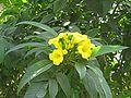 2009-03 Chitwan 01.jpg