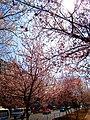 2011年的春天 - panoramio (2).jpg