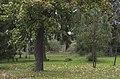 2014 Krosnowice, park przy dworze, 01.JPG