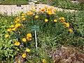 2015-05-27 Paris, Jardin des plantes 07.jpg