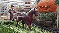 2017-04-20 Shouguang Vegetable SciTech Fair 3.020 anagoria.jpg