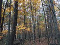 2017-11-09 14 36 35 Wooded area during late autumn along Stone Heather Drive in the Chantilly Highlands section of Oak Hill, Fairfax County, Virginia.jpg