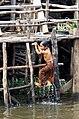 20171129 Girl in Kampong Phlouk 6155 DxO.jpg
