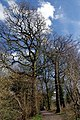 25.3.16 Delamere Forest 02 (25429291134).jpg