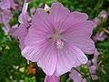 4963 - Mürren-Gimmelwald - Flowers.JPG