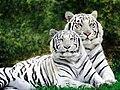 5-hayvan-resimleri.jpg
