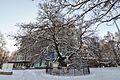 80-391-5007 Kyiv Petro Mohyla Linden Tree RB.jpg
