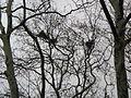 Ağaçta kuş.JPG