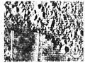 A15.lsp257-dandelion-crater.jpg