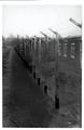 AGAD Budowa obozu niemieckiej Centrali Przesiedleńczej w Potulicach 1.png