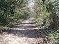 A Black Cat takes a Stroll along Pyehurn Lane - geograph.org.uk - 389100.jpg