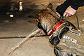 A Soldier's best friend 150210-A-TU438-002.jpg