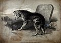 A dog standing on a fresh grave looking mournfully. Lithogra Wellcome V0020855.jpg
