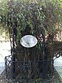 """A híres Líciumfa (The famous """"Licium tree"""") - panoramio.jpg"""