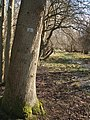 A ride (track) in Round Coppice, Hatfield Forest - geograph.org.uk - 365615.jpg