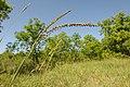 A variety of plants make up a Riparian Buffer. (24482283844).jpg